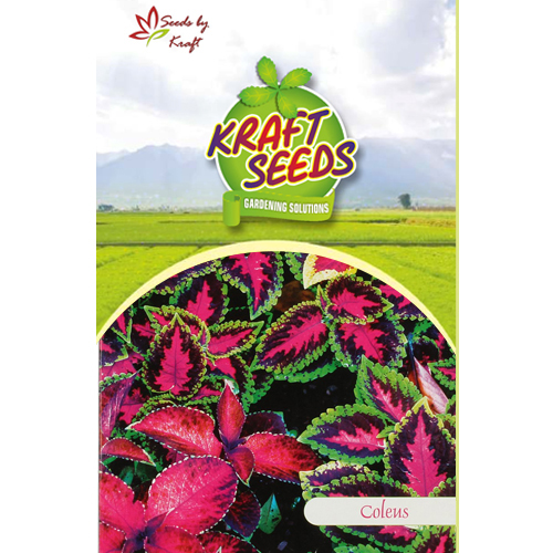 COLEUS MIX Flower Seeds Pack for Home and Balcony Gardening