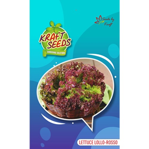 lettuce-lollo-rosa-red-improved-quality-english-vegetable-seeds-small-pack