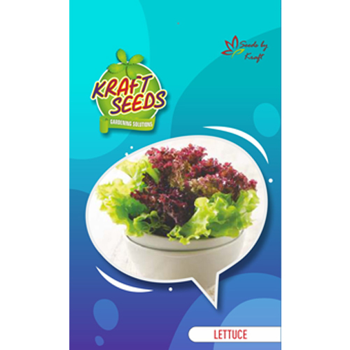 lettuce-iceberg-improved-quality-english-vegetable-seeds-small-pack