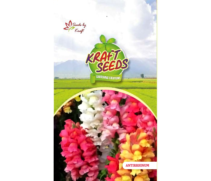 ANTIRRHINUM TOM THUMB MIX Flower Seeds Pack for Home and Balcony Gardening