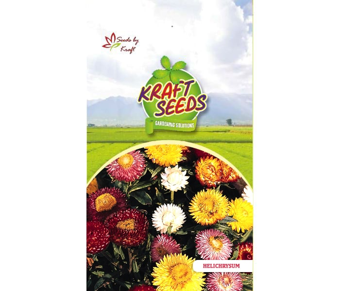 helichrysum-paper-flower-flower-seeds-pack-for-home-and-balcony-gardening