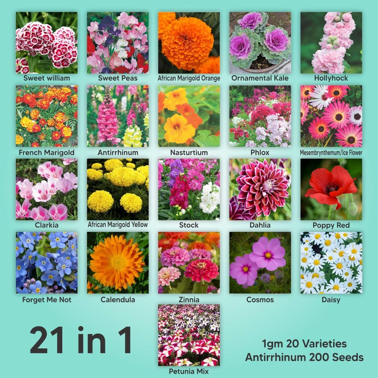 Kraft Seeds Gate Garden, Mix of 21 Different Varieties of Non-GMO Seeds, Bee and Butterfly Garden Seeds, Colorful Annual Flower Seeds, Indian Seeds for Your Garden, 1 Gram Each Variety
