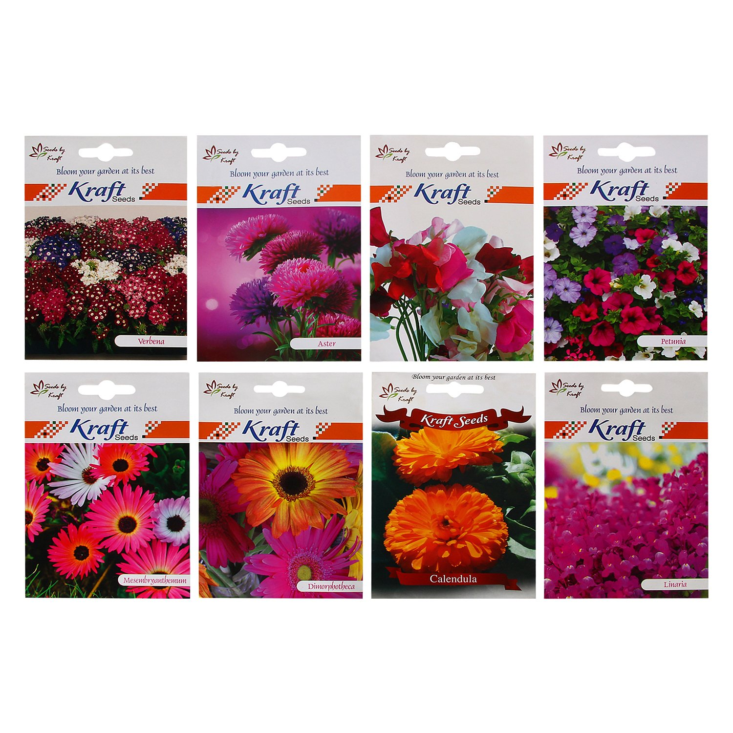 Winter Flower Seeds Combo (Pack of 8) by Kraft Seeds