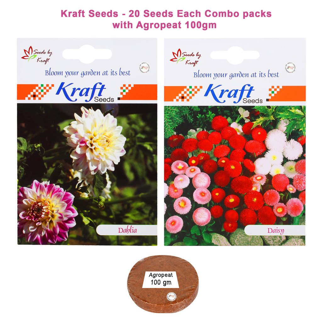 Kraft Seeds Dahlia DBL Mix and Daisy Pomponette Mix Combo Seeds with Agropeat