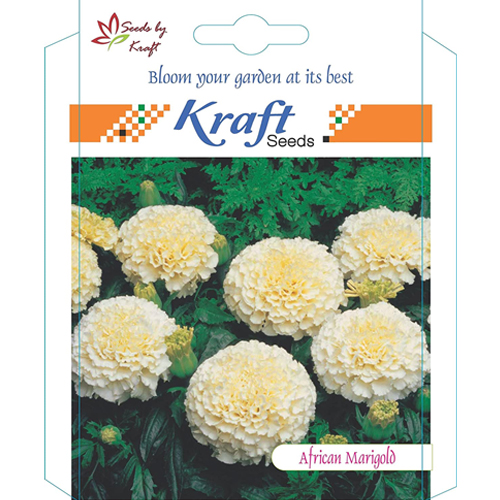 african-marigold-f1-vanilla-white-flower-seeds-pack-for-home-and-balcony-gardening