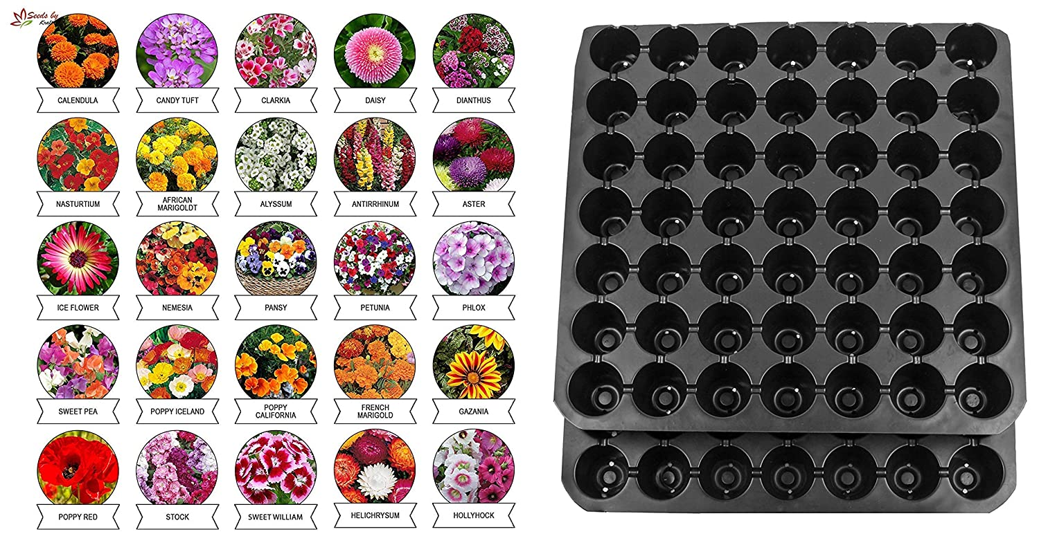 Summer Flower Seeds (Multi-variety Pack of 25) & Seedling Tray 49 Cavity (Pack of 5) Combo