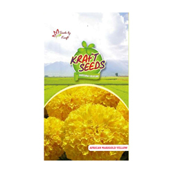 African Marigold Yellow Flower Seeds Pack for Home and Balcony Gardening