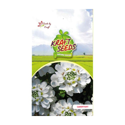 CANDYTUFT White Flower Seeds Pack for Home and Balcony Gardening