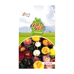 HELICHRYSUM / PAPER FLOWER Flower Seeds Pack for Home and Balcony Gardening