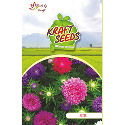 ASTER DWARF DOUBLE MIX Flower Seeds Pack