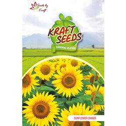 SUNFLOWER DWARF SUNGOLD Flower Seeds Pack for Home and Balcony Gardening