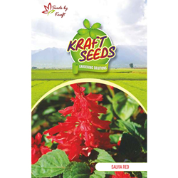 SALVIA RED MIX Flower Seeds Pack for Home and Balcony Gardening