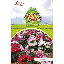 CLARKIA K-S SPL MIX Flower Seeds Pack for Home and Balcony Gardening