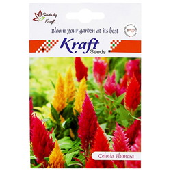 CELOSIA PLUMOSA K‐S SPL MIX Flower Seeds Pack for Home and Balcony Gardening