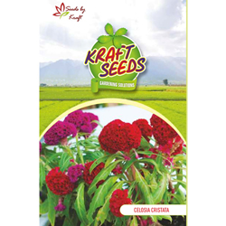 CELOSIA CRISTATA K‐S SPL MIX Flower Seeds Pack for Home and Balcony Gardening