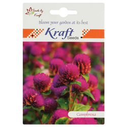 GOMPHRENA K-S SPL MIX Flower Seeds Pack for Home and Balcony Gardening