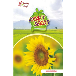 SUNFLOWER TALL SUNGOLD Flower Seeds Pack for Home and Balcony Gardening