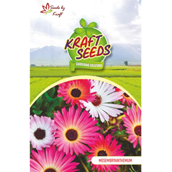 MESEMBRYANTHEMUM / ICE FLOWER MIX Flower Seeds Pack for Home and Balcony Gardening