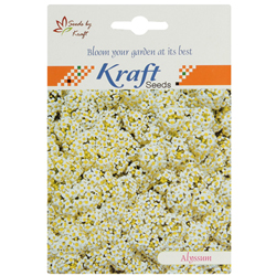 ALYSSUM CARPET OF SNOW Flower Seeds Pack for Home and Balcony Gardening