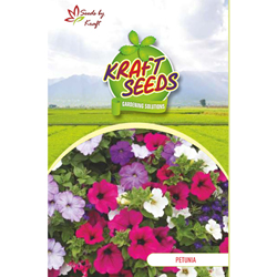PETUNIA STAR MIX Flower Seeds Pack for Home and Balcony Gardening