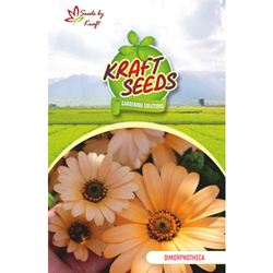 DIMORPHOTHECA Flower Seeds Pack for Home and Balcony Gardening