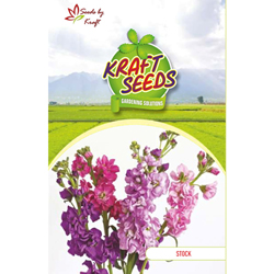 STOCK MIX Flower Seeds Pack for Home and Balcony Gardening