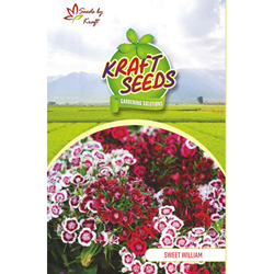 SWEET WILLIAM MIX Flower Seeds Pack for Home and Balcony Gardening