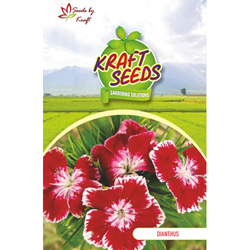DIANTHUS K-S SPL MIX Flower Seeds Pack for Home and Balcony Gardening