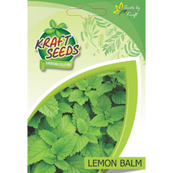 LEMON BALM Herb Seeds NON-GMO Seeds Pack for Home and Balcony Gardening