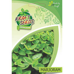 MARJORAM Herb Seeds NON-GMO Seeds Pack for Home and Balcony Gardening