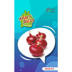 Onion Red Seeds
